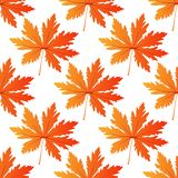 Pretty colorful autumn leaf seamless pattern. Pretty colorful orange autumn leaf seamless pattern in square format for seasonal design Royalty Free Stock Image