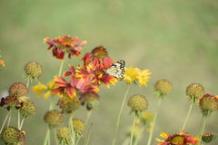 Pretty colorful flowers in full spring bloom with butterfly Royalty Free Stock Photography