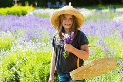 Pretty country girl picking flowers. A pretty young girl in a field of Lavender picking a bouquet Royalty Free Stock Photo