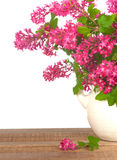 Pretty Currant Flowers in Vase on Rustic Wood with White Background Stock Image