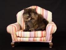 Pretty cute Persian kitten on mini chair Royalty Free Stock Photo