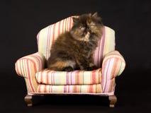 Pretty cute Persian kitten on mini chair Royalty Free Stock Photography