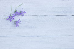 Pretty dainty purple flowers Royalty Free Stock Photography