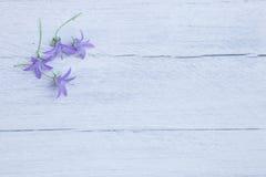 Pretty dainty purple flowers royalty free stock photography