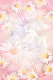 Pretty daisies grungy background Royalty Free Stock Photo