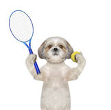 Pretty dog is going to play tennis Royalty Free Stock Photos
