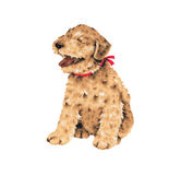 Pretty dog. I made the illustration of the puppy which I loved Royalty Free Stock Photos