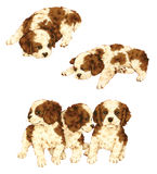 Pretty dog. I made the illustration of the puppy which I loved Stock Photo