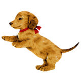 Pretty dog. I made the illustration of the puppy which I loved Royalty Free Stock Image