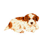 Pretty dog. I made the illustration of the puppy which I loved Royalty Free Stock Photography