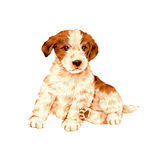 Pretty dog Royalty Free Stock Images