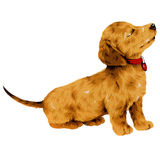 Pretty dog. I made the illustration of the puppy which I loved Stock Image