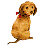 Pretty dog. I made the illustration of the puppy which I loved Stock Photography