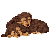 Pretty dog. I made the illustration of the puppy which I loved Royalty Free Stock Photo