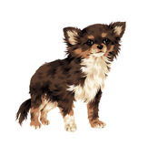 Pretty dog. I made the illustration of the puppy which I loved Stock Photos