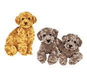 Pretty dog. I made the illustration of the puppy which I loved Royalty Free Stock Images