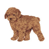 Pretty dog. I made the illustration of the puppy which I loved Stock Images