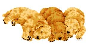 Pretty dog Royalty Free Stock Photos