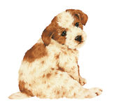 Pretty dog Royalty Free Stock Photo