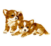 Pretty dog Royalty Free Stock Image
