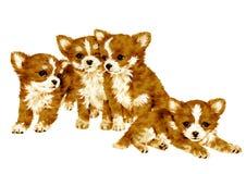 Pretty dog Stock Image