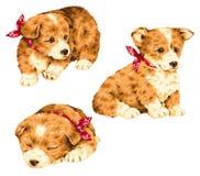 Pretty dog Stock Photo