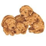 Pretty dog. Puppy dog illustration drawn by hand Royalty Free Stock Photo