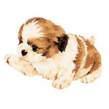 Pretty dog. Puppy dog illustration drawn by hand Royalty Free Stock Photos