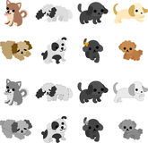 The pretty dogs Royalty Free Stock Image