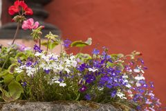 Pretty early summer flowers in a rockery. Gorgeous pink red and purple flowers, in a rockery display, against a terracotta painted wall royalty free stock photography