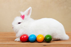 The pretty easter rabbit guarding colorful eggs Royalty Free Stock Photography