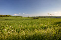 Pretty English field in Springtime. Farmland near the Cotswold village of Cutsdean, Gloucestershire, England Royalty Free Stock Photos