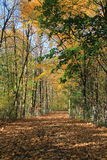 Pretty Fall path through the woods Stock Photography