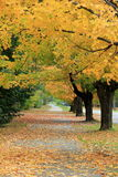 Pretty Fall street with Bright yellow leaves of Autumn Stock Images