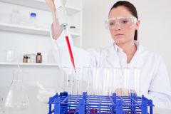 Pretty female biologist holding a manual pipette. With sample from test tubes in a lab Royalty Free Stock Image