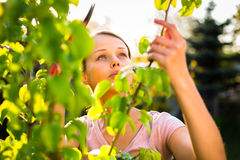 Pretty female gardener Stock Photography