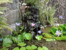 A pretty fish pond in the tropics stock video footage