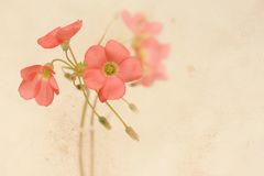 Pretty floral grungy background with pink flowers Stock Images