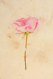 Pretty floral vintage background Stock Photo