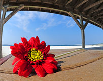 Pretty flower in beach shelter Stock Photo
