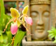Pretty flower Stock Image