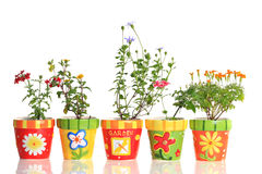 Pretty flower pots Stock Image