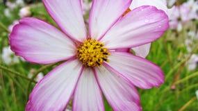 Pretty flower Royalty Free Stock Photo