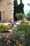 Pretty flowering shrub in a garden Royalty Free Stock Photos