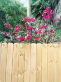 Pretty flowers stock photo