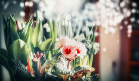 Pretty flowers at bokeh background. Close up Stock Image
