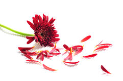 Pretty flowers despair royalty free stock images