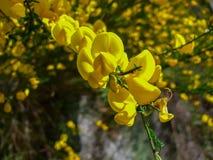 Pretty flowers in a garden.  Stock Photo