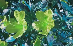 Flowers with green filter. Pretty flowers with green filter royalty free illustration