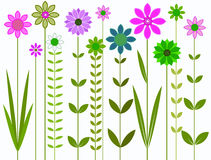 Pretty Flowers Illustration. A graphic image of colourful flowers and long stems Stock Image